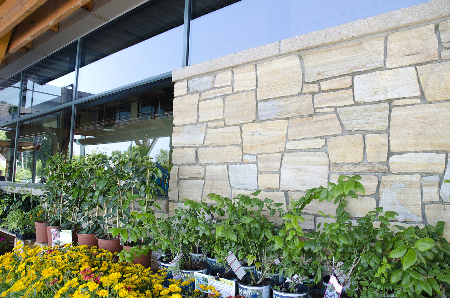stone wall with plants and flowers for sale